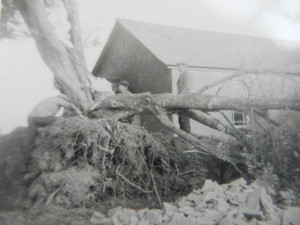 Sawing Tree
